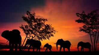 elefantessabana