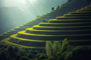 arrozal montaña